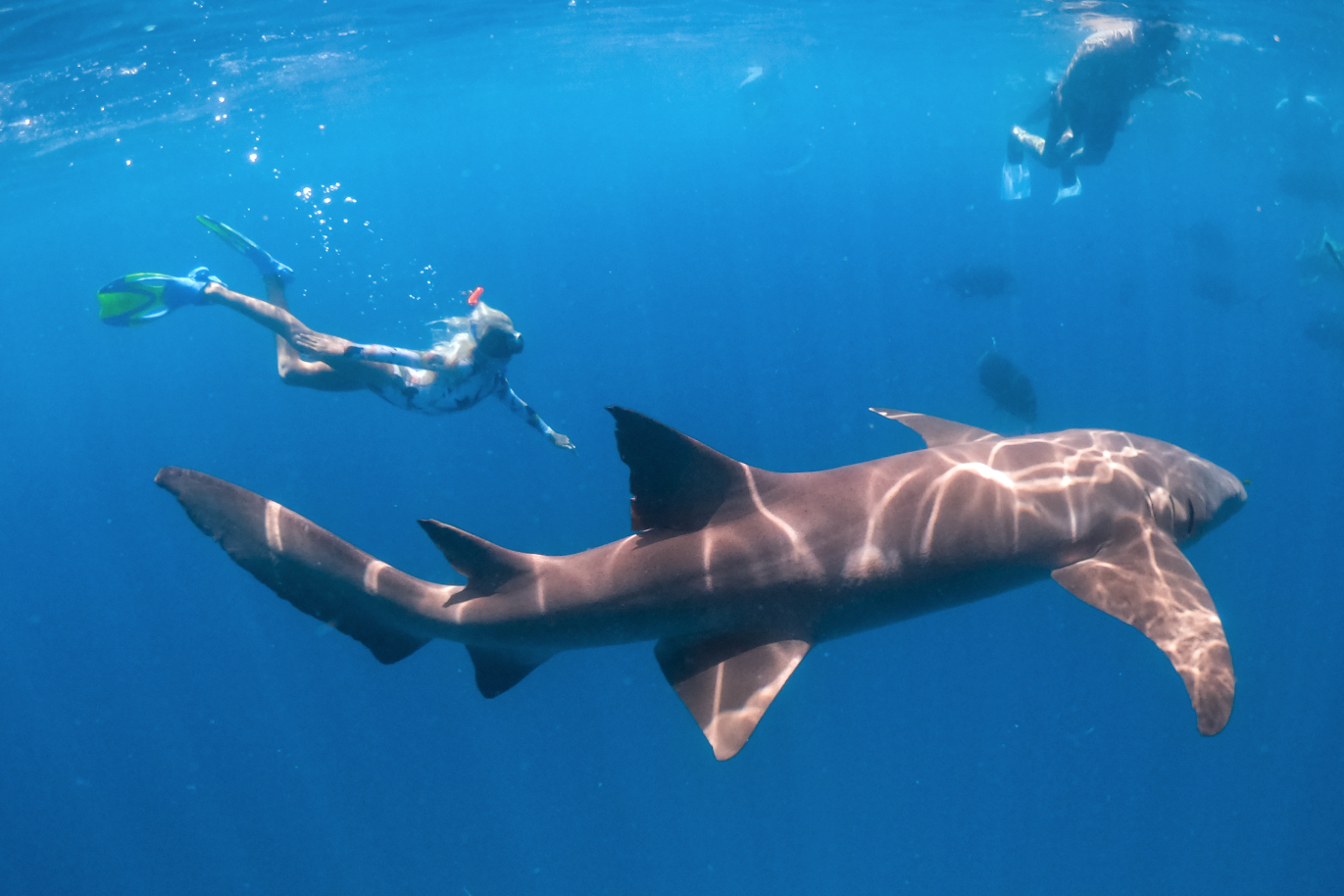 Shark Snorkeling Excursion